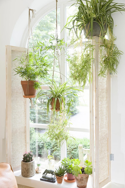 hanging plant spider