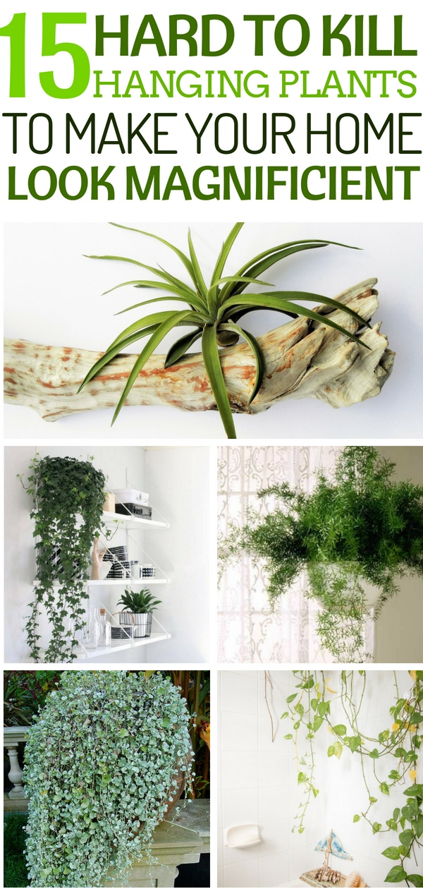 hard to kill hanging plants