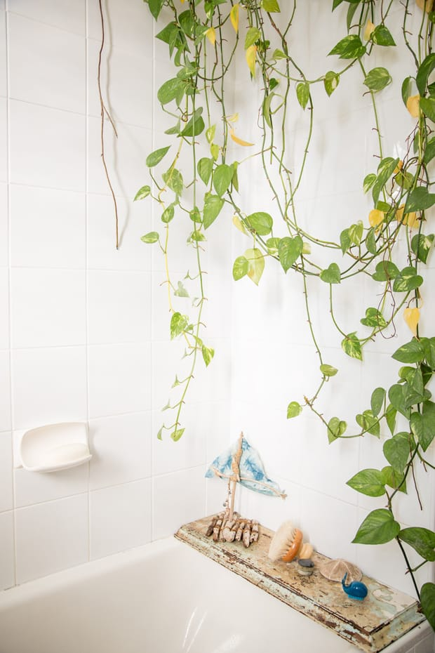 Devil's Ivy Hanging Plant