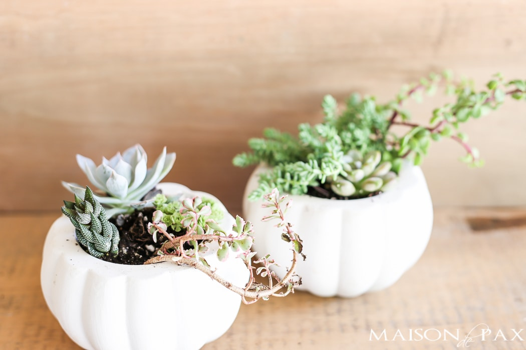 fall-succulent-planter-12