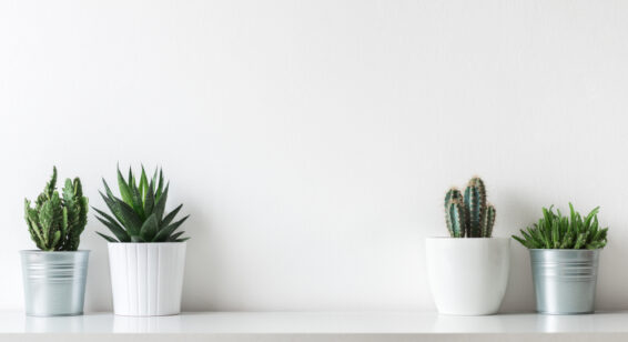 Organized succulents at home